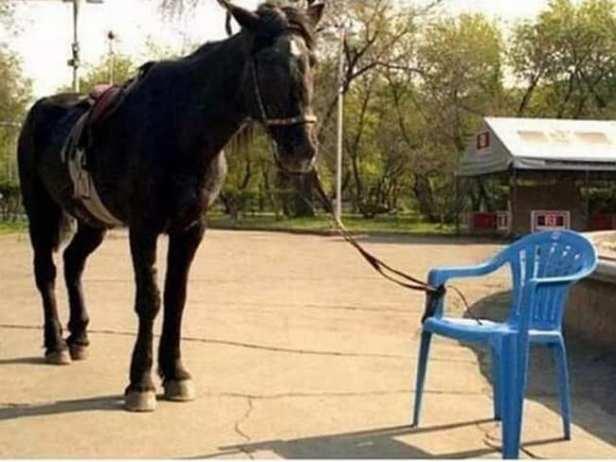 Cal scaun albastru